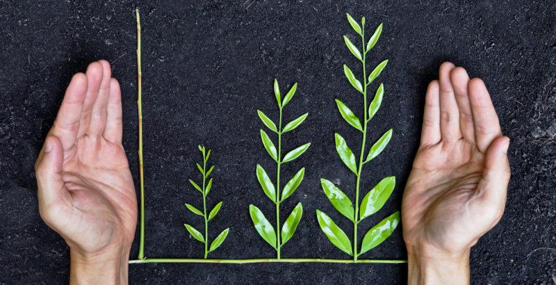 graf med grønne planter